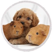 Puppy And Guinea Pigs Round Beach Towel
