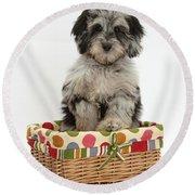 Puppy In A Basket Round Beach Towel