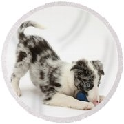 Puppy Playing With A Ball Round Beach Towel