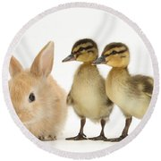 Rabbit And Ducklings Round Beach Towel