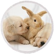 Rabbit And Puppies Round Beach Towel