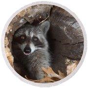 Raccoon Procyon Lotor Round Beach Towel