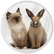 Ragdoll-cross Kitten And Young Rabbit Round Beach Towel