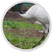 Red Crowned Crane Round Beach Towel