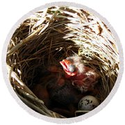 Red-winged Blackbird Babies And Egg Round Beach Towel