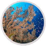 Reef Scene With Sea Fan, Papua New Round Beach Towel