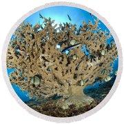 Reticulate Humbugs Gather Under Stone Round Beach Towel