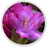 Rhododendron Bloom Round Beach Towel