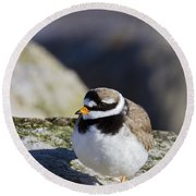 Ringed Plover Round Beach Towel