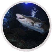 Sand Tiger Shark, Blue Zoo Aquarium Round Beach Towel