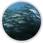 School Of Trevally Swimming By, Bali Round Beach Towel