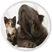 Shar Pei Puppy And Tortoiseshell Kitten Round Beach Towel