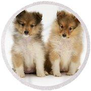 Sheltie Puppies Round Beach Towel by Jane Burton