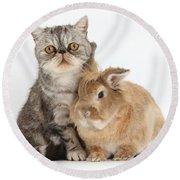 Silver Tabby Cat And Lionhead-cross Round Beach Towel