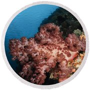Soft Coral Seascape,  Indonesia Round Beach Towel