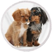 Spaniel & Dachshund Puppies Round Beach Towel by Mark Taylor