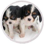 Spaniel Puppies Round Beach Towel