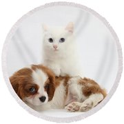 Spaniel Puppy And Kitten Round Beach Towel