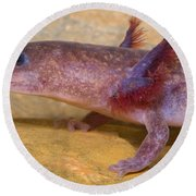 Spring Salamander Round Beach Towel