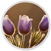 Spring Time Crocus Flower Round Beach Towel
