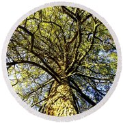 Stalwart Pine Tree Round Beach Towel