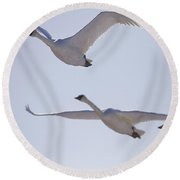 Swans Flying In Formation, Yukon Round Beach Towel