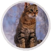 Tabby Cat Portrait Of A Cat Round Beach Towel