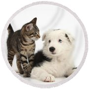 Tabby Kitten & Border Collie Round Beach Towel
