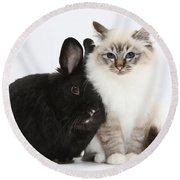 Tabby-point Birman Cat And Black Rabbit Round Beach Towel
