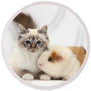 Tabby-point Birman Cat And Guinea Pig Round Beach Towel