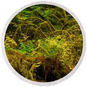 Temperate Rain Forest Round Beach Towel by Adam Jewell