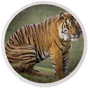 The Sumatran Tiger  Round Beach Towel