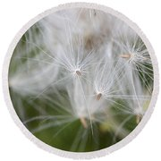 Thistle Seeds Round Beach Towel