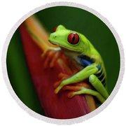 Tree Frog 19 Round Beach Towel