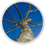 Tree With Branches Round Beach Towel