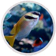 Tropical Fish Round Beach Towel