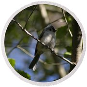 Tufted Titmouse 2 Round Beach Towel