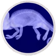 Veiled Chameleon X-ray Round Beach Towel
