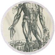 Vesalius De Humani Corporis Fabrica Round Beach Towel by Science Source