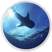 Whale Shark Near Surface With Sun Rays Round Beach Towel