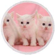 White Kittens Round Beach Towel