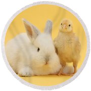 White Rabbit And Bantam Chick On Yellow Round Beach Towel
