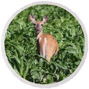 Whitetail Deer Round Beach Towel