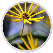 Wild Swamp Daisy Round Beach Towel