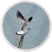 Wings Up Round Beach Towel