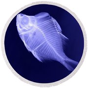 X-ray Of A Humphead Glassfish Round Beach Towel
