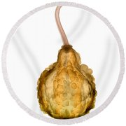 X-ray Of Fall Decorative Gourd Round Beach Towel