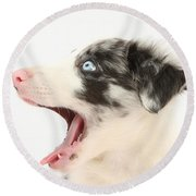 Yawning Border Collie Pup Round Beach Towel