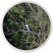 Yellow-crowned Night-heron Round Beach Towel