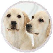 Yellow Labrador Retriever Pups Round Beach Towel
